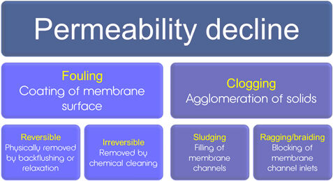 Permeability decline causes   Feat Ragging In Immersed Hf Mbrs Fig Intro