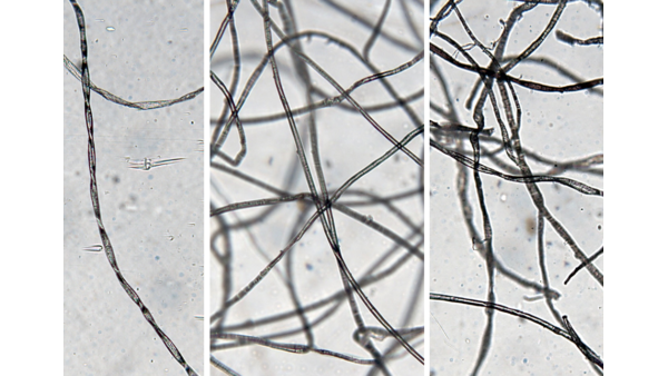 Microscopic images of (a) cotton wool, (b) MBR rag and (c) lint